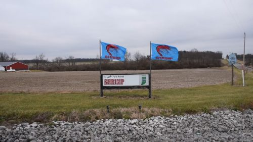 Sign in grassy field with text: Fresh farm raised shrimp