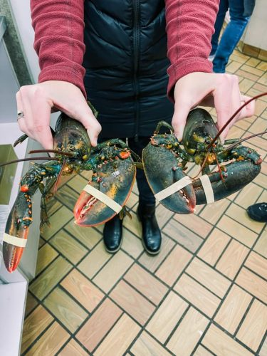 Person holding two lobsters with rubber bands aroudn claws